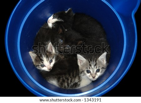 Bucket full of kittens