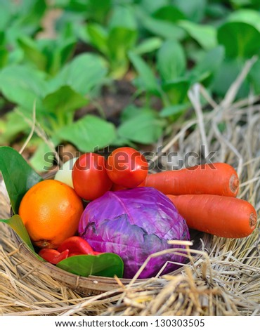 Bucket of colorful vegetables