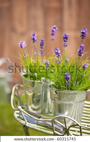 Buckets of lavender flowers amongst grass in the garden with trowel, watering can in background