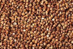 buckwheat. fresh buckwheat. dry buckwheat background. buckwheat texture