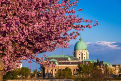 Budapest, Hungary - Beautiful blooming pink japanese cherry trees at Arpad Toth promenade (Toth Arpad setany) in Castle District on a sunny spring afternoon with Buda Castle Royal Palace at background