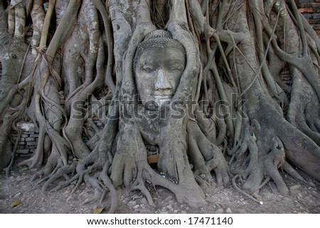 Buddha head encased in tree roots at the temple of Wat Mahatat in Ayutthaya ,Thailand.