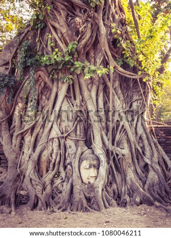 buddha head trapped in big tree ...