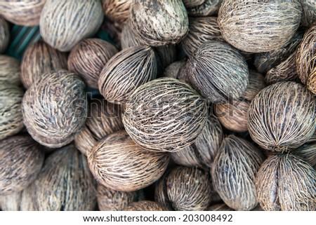 Buddha palm seed  #203008492