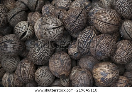 Buddha palm seed in the Amsterdam Flower Market #219845110