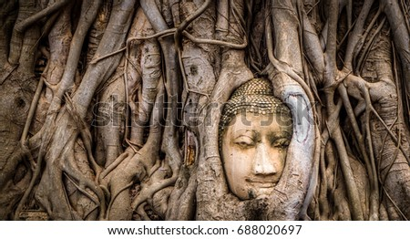 Buddha's head in a tree. One of the most popular Thai Buddha heads in the world is Buddha Head in Tree Roots, Wat Mahathat, Ayutthaya. The ancient temple in the location built around fourteen century. #688020697