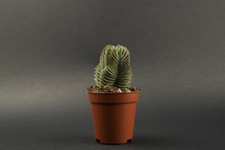 Buddha's Temple in pot with black background