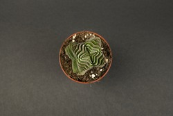 Buddha's Temple in pot with black background, overhead view