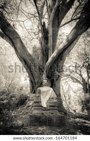 Buddha under the tree