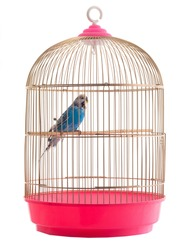 budgie gold cage isolated on a white background