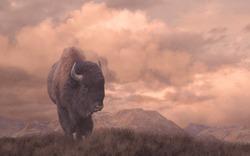 Buffalo / An original 15x24 painting of a buffalo on the Wyoming prairie. / AW-016