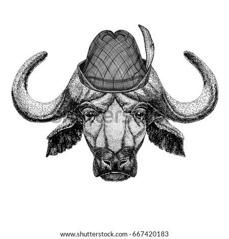buffalo  bull  ox wild animal...