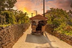 Buffalo carriage for sightseeing in taketomi island, Okinawa, Japan