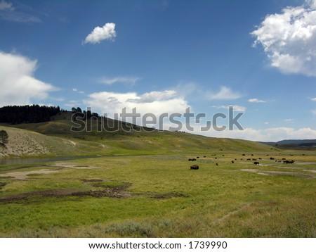 Buffalo on the range - stock photo