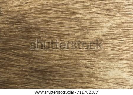 Buffalo skin, animal skin, animal texture #711702307