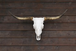 Buffalo skull on old wooden wall