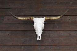 Buffalo skull on old wooden wall