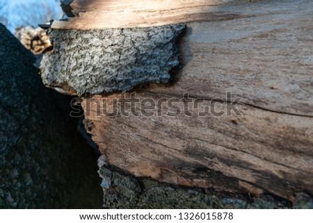 Bug etchings on bark of fallen tree #1326015878