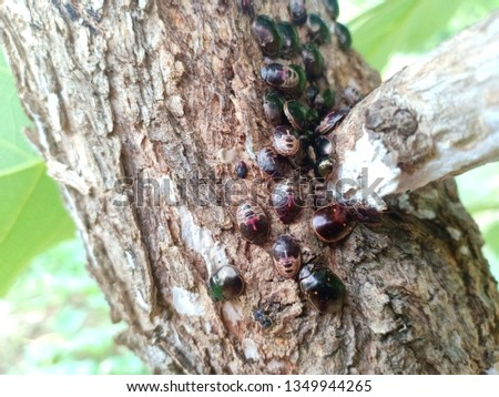 bug on tree