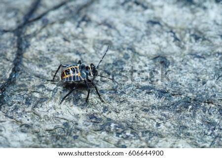 Bug walking on a dead tree trunk. #606644900