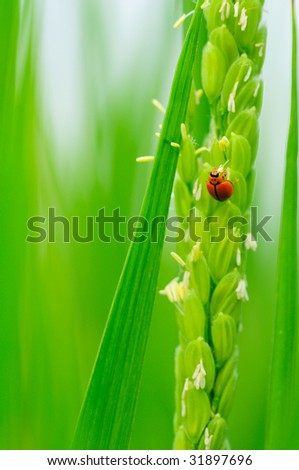 bug with crop - stock photo