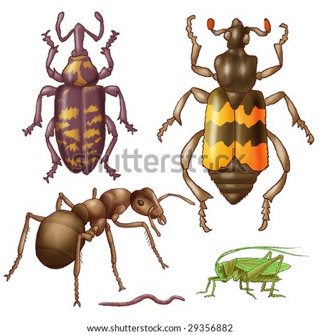Bugs, ant, grasshopper and worm on a white background