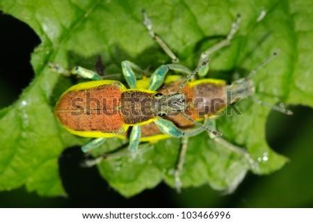 bugs on green leaf #103466996
