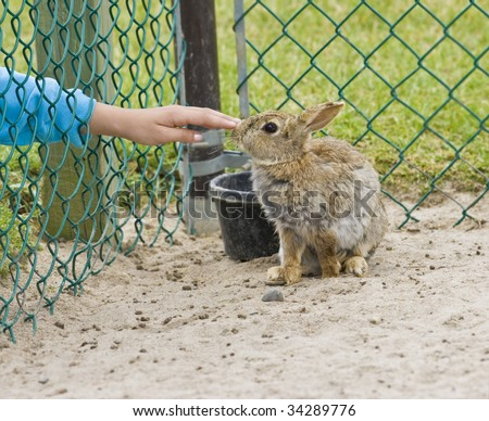 building a trust with injured wild baby rabbit