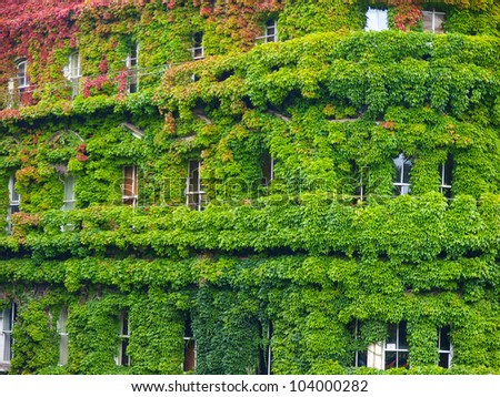 building covered with grapes vine, New Zealand Auckland - stock photo