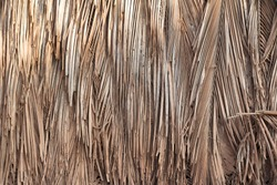 Building or fence wall texture background with dry palm leaves, reed, bamboo, or straw. Natural materials for a home in tropical places in India. Ecological conditions in the village.