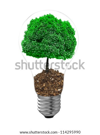 bulb and tree grass on a white background