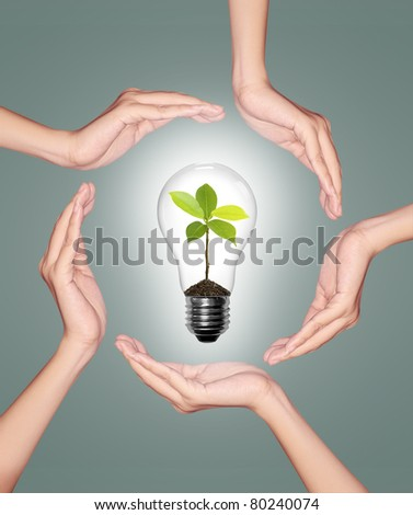 Bulb light in woman hand, light bulb with sprout inside on green background