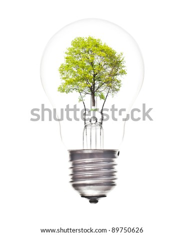 Bulb light with green tree inside isolated on white background - stock photo