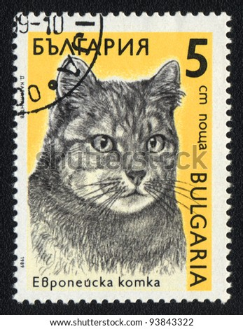 BULGARIA - CIRCA 1989: A stamp printed in BULGARIA  shows a  European cat, from series Breeds of cats, circa 1989