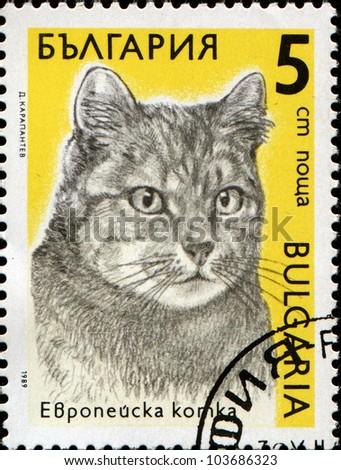 BULGARIA - CIRCA 1989: A stamp printed in Bulgaria shows a European cat, series Cats, circa 1989