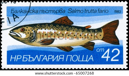 "BULGARIA - CIRCA 1983: A Stamp printed in BULGARIA shows image of a Brown Trout with the description ""Salmo trutta fario"" from the series ""Fresh-water Fish"", circa 1983"