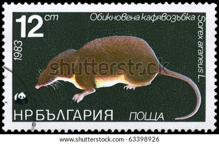 """BULGARIA - CIRCA 1983: A Stamp printed in BULGARIA shows image of a Common Shrew with the description """"Sorex araneus"""" from the series """"Various bats and rodents"""", circa 1983"""