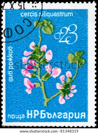 "BULGARIA - CIRCA 1976: A Stamp printed in BULGARIA shows image of a Judas Tree with the description ""Cercis siliquastrum"", series, circa 1976"