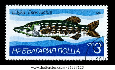 "BULGARIA - CIRCA 1983: A Stamp printed in BULGARIA shows image of a Pike with the description ""Esox lucius"" from the series ""Fresh-water Fish"", circa 1983"
