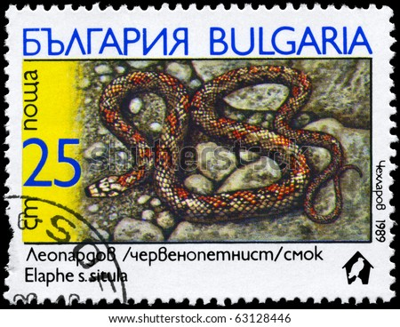 "BULGARIA - CIRCA 1989: A Stamp printed in BULGARIA shows the image of a European Ratsnake with the description ""Elaphe situla"" from the series ""Snakes"", circa 1989"