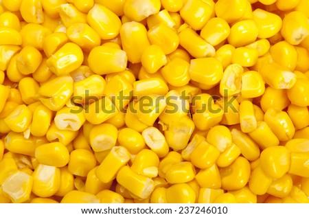 Bulk of yellow corn grains texture
