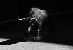 Bull in bullring on spain