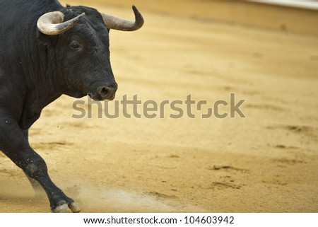 Bull in the bullring with a copy space made of arena.