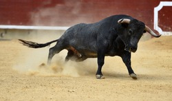Bull in traditional  spectacle in spain