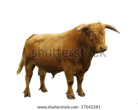 Bull isolated.