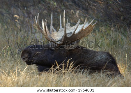 Bull Moose checking it out