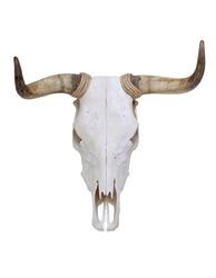 Bull skull with horns