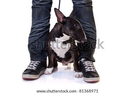 bull terrier puppy between legs