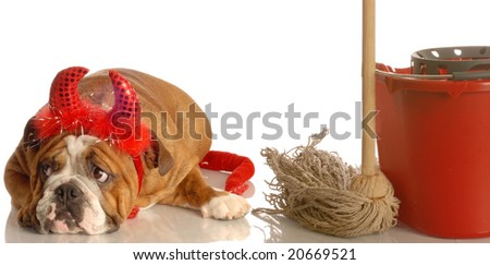 bulldog dressed as devil with mop and bucket - the devil made me do it