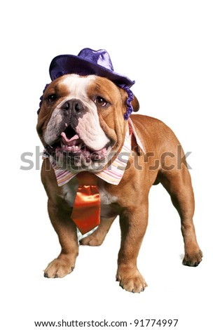 Bulldog Dressed up in halloween outfit